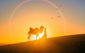 Картинка девушка, солнце, закат, пустыня, вечер, верблюд, силуэты, Sunset, Bird, Camel, Warm, Beautiful Desert