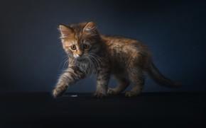 Картинка фон, котёнок, котейка, Alexander Drobkov-Light