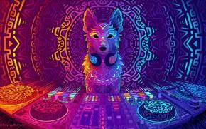 Картинка собака, арт, диджей, art, DJ, 2019, Disco Dingo, Sylvia Ritter, by Sylvia Ritter