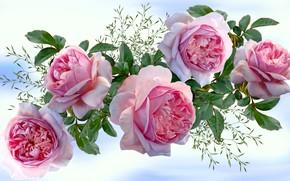 Картинка Grafika, Kwiaty, Roże