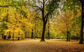 Картинка осень, деревья, парк, листва
