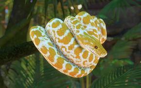 Картинка желтый, природа, рендеринг, змея, питон, боке