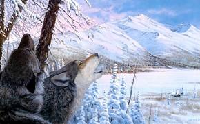 Картинка зима, иней, лес, снег, деревья, горы, ветки, природа, поза, стволы, берег, рисунок, вершины, волк, картина, …
