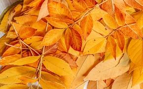 Картинка осень, листья, фото