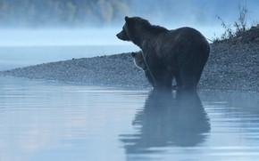 Картинка вода, отражение, река, утро, медведи, медвежонок, медведица