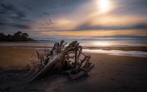 Картинка песок, море, коряга