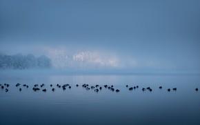 Картинка птицы, туман, озеро