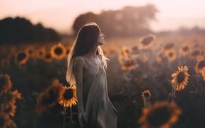 Картинка поле, лето, девушка, подсолнухи