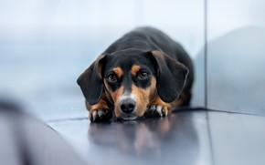 Картинка фон, друг, собака