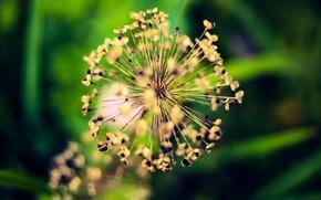 Картинка Nature, Flower, Wallpaper, Macro