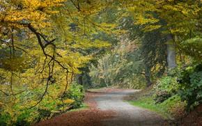 Картинка дорога, осень, парк, листва, скамья