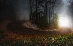 Картинка дорога, осень, лес, свет, снег, деревья, ветки, туман, листва, утро, тропинка