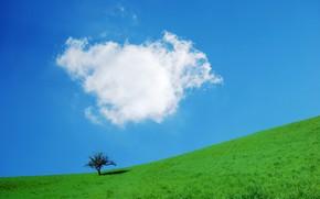 Картинка небо, трава, дерево, склон