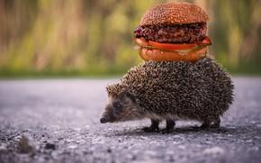 Картинка дорога, асфальт, иголки, фон, еда, мясо, зверек, ежик, бутерброд, гамбургер, ёжик, фастфуд, городской, ноша, еж, …