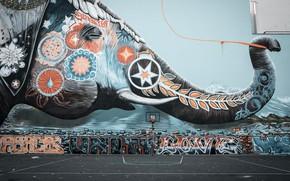 Картинка листья, звезды, стена, граффити, звезда, слон, wall, star, баскетбол, graffiti, basketball, хобот, leaves, stars, elephant, …