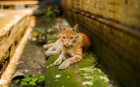 Картинка зелень, кошка, кот, взгляд, город, дом, стена, улица, ржавчина, рыжий, труба, лежит, кирпичи, полосатый, желтые …