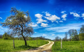 Картинка дорога, лето, дерево, забор