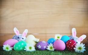 Картинка цветы, праздник, яйца, мышка, пасха, травка