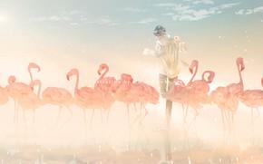 Картинка птицы, стая, парень, фламинго, by 世