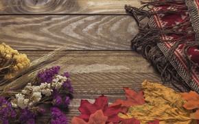 Картинка осень, листья, цветы, фон, дерево, colorful, wood, background, autumn, leaves, осенние, maple