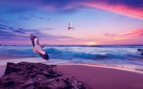 Картинка море, небо, закат, берег, чайка, аист