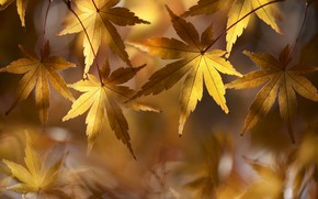 Картинка golden, autumn, leaves, fallen