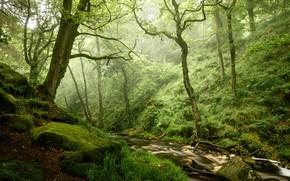 Картинка лес, камни, мох, речка