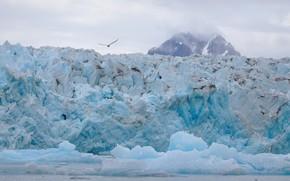 Картинка холод, зима, море, снег, полет, горы, птица, берег, лёд, чайка, ледник, льдины, глыбы, айсберги, Гренландия