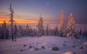 Картинка зима, закат, природа