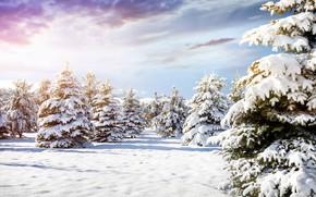 Картинка зима, лес, небо, облака, свет, снег, пейзаж, ветки, природа, зимний, сказка, ели, сугробы, тени, пушистые, …