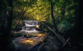 Картинка лес, ручей, камни