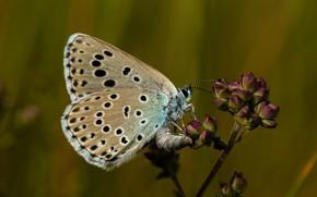 Картинка лето, фон, бабочка
