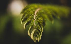 Картинка Растение, Ветка, Растения, Color, Flora, Plants, Close-up, Флора, Plant, by Rahul Pandit, Rahul Pandit