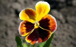Картинка весна, Цветок, красиво