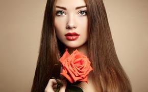 Картинка цветок, взгляд, девушка, фон, модель, роза, портрет, макияж, прическа, шатенка, красотка, красная, Oleg Gekman