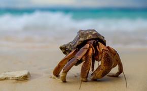 Картинка песок, море, волны, фон, берег, краб, раковина, ракушка, крабик, клешни, панцирь