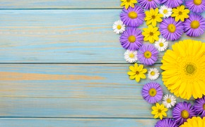Картинка цветы, ромашки, герберы, yellow, wood, blue, flowers, garden, purple, gerbera