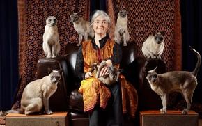 Картинка взгляд, кошки, лицо, улыбка, фон, милая, женщина, коты, мебель, бабушка, кресло, сидит, хозяйка, старушка, много, …