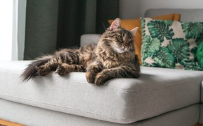 Картинка кошка, взгляд, поза, диван