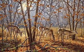 Картинка осень, лес, листья, солнце, свет, деревья, ветки, природа, туман, парк, листва, рисунок, картина, утро, арт, …
