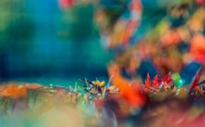 Картинка осень, размытие, краски осени, боке, осенние листья