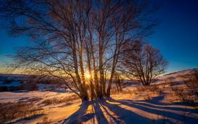 Картинка солнце, деревья, закат, холмы
