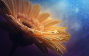 Картинка цветок, макро, природа, лепестки