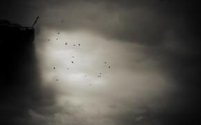 Картинка полет, птицы, обрыв, flight, birds, cliff, Nic Keller