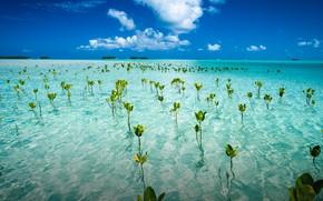 Картинка примерно на полпути между Гавайями и Австралией, formerly known as the Ellice Islands, растения тувалу …