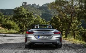 Картинка серый, растительность, BMW, родстер, обочина, корма, BMW Z4, M40i, Z4, 2019, G29