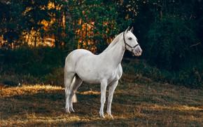 Картинка белый, свет, природа, поза, темный фон, конь, листва, лошадь, белая, кусты