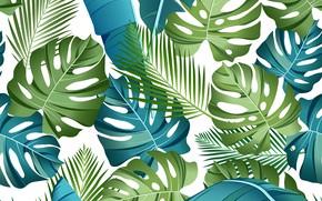 Картинка белый, листья, фон, Текстура, тропические