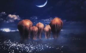 Картинка облака, бабочки, цветы, ночь, темный фон, рендеринг, луна, берег, планета, семья, арт, слоны, водоем, семейство, …