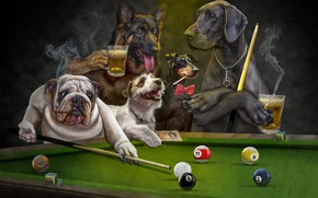 Картинка язык, собаки, взгляд, темный фон, рендеринг, стол, отдых, шары, игра, пиво, собака, клуб, бильярд, арт, …